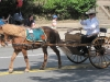horse-with-cart